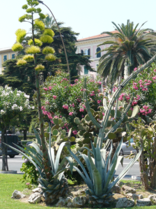 palmaria6
