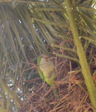 Jolis oiseaux à Barcelone