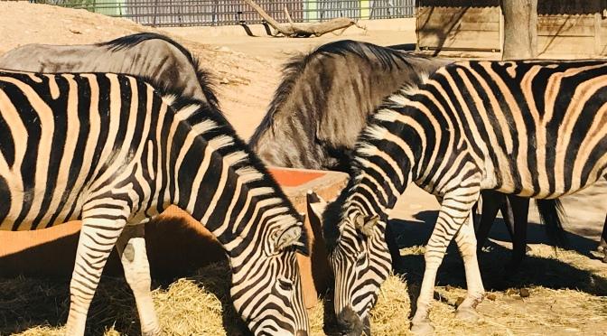 Escale à Barcelone: Visite du Zoo en centre-ville